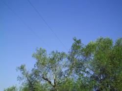 Taglio piante in prossimità delle linee elettriche aeree